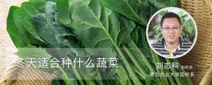 冬季适合种什么蔬菜