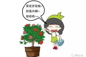 茶花养殖大揭秘,过年买的茶花就这么养