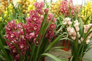 旺财旺运好兆头,12种新年必选花卉!