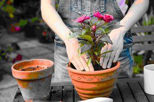 黄叶、萎蔫…刚买回家、刚换完盆的花说死就死?为什么?