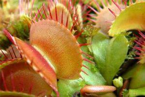 蚊子最怕这8种花,养1盆,蚊香花露水全省了!