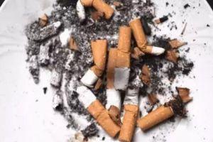 抽完的烟头不要丢,养花去污杀蚊虫,99%的人不知道!