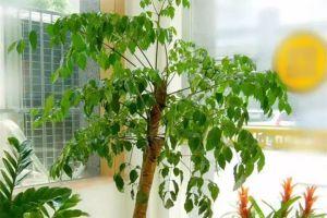 绿萝、芦荟叶子上都是灰,你还想让它净化空气,吸甲醛?