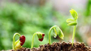 怎么辨别盆土是酸性还是碱性