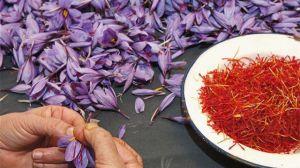 藏红花怎么吃