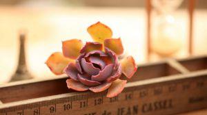 家庭室内植物怎么养?