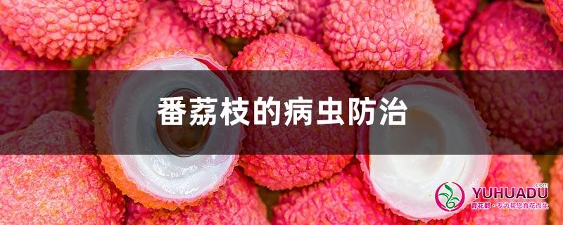 番荔枝的病虫防治