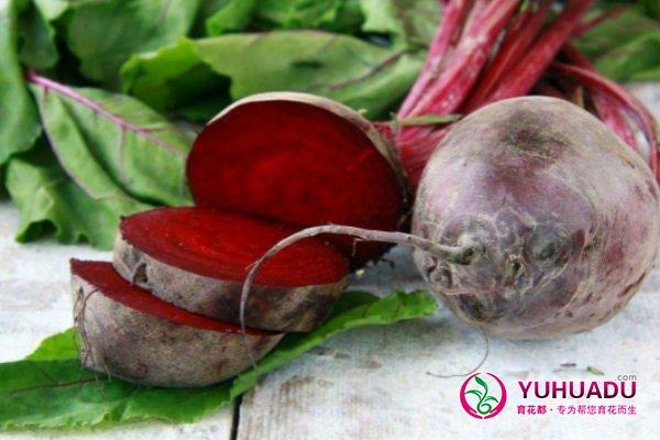 甜菜的病害防治